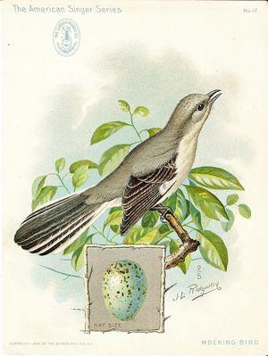 SingerMockingbird