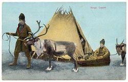 Arctic explorer reindeer