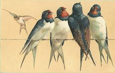 A Large Aviary vintage