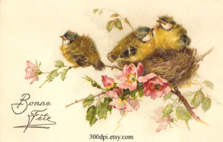 Three Fledglings In A Nest High Up In A Tree