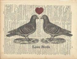 Love Birds Sitting On A Fence