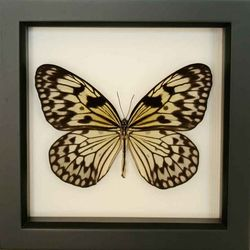 Butterfly framed