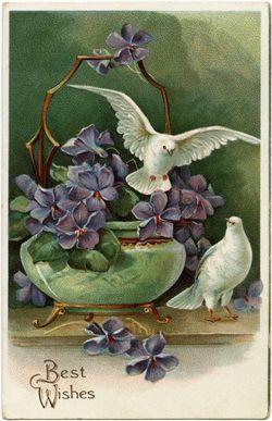 White Dove Bringing A Message
