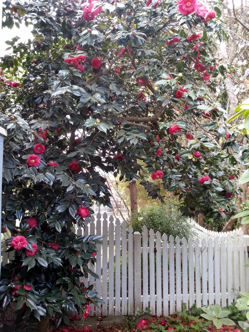 Katoomba side gate