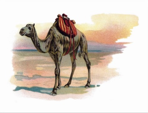 Camel Crossing A Vast And Forbidding Desert