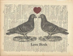 Love Birds Sitting On A Fence